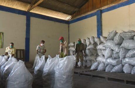 Comprometidos forestales guantanameros con producción de carbón vegetal