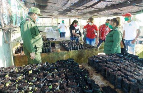 Evalúan en Guantánamo aportes de la ciencia para la producción de alimentos
