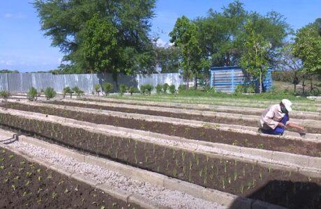 La ciencia en función de la producción de alimentos
