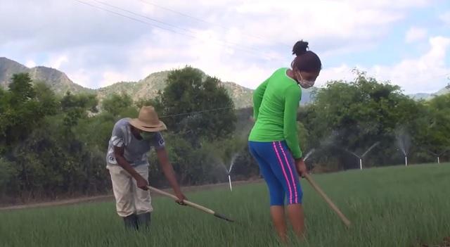 Aporta la agricultura familiar a la soberanía alimentaria