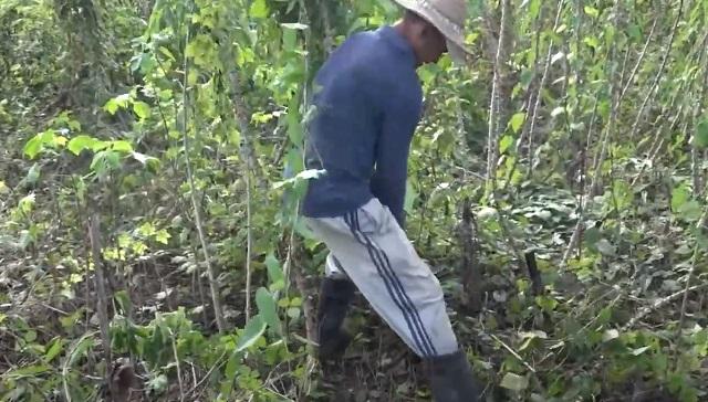 Campesino Obilmer Abad, de Baracoa