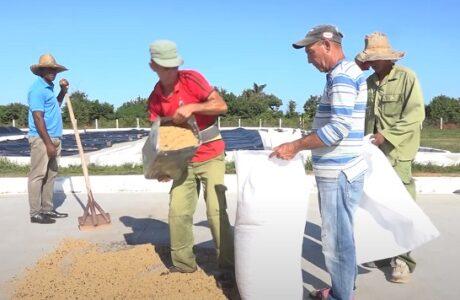 Crecen beneficios para trabajadores de la Empresa Agroforestal y Coco de Baracoa