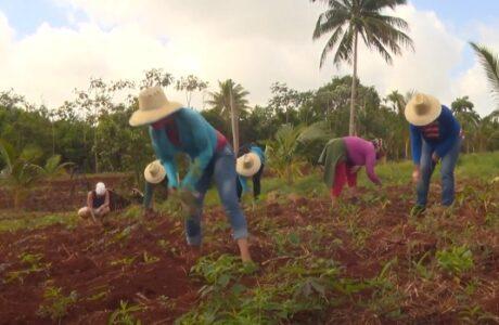 Soberanía alimentaria entre las prioridades del sector educacional en Maisí