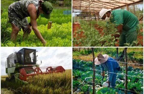Cuba prioriza producción de alimentos con nuevo paquete de medidas
