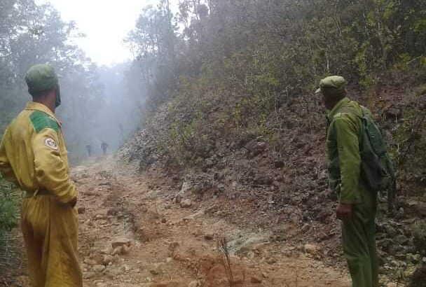 Evalúan daños tras incendio en Parque Nacional Alejandro de Humboldt