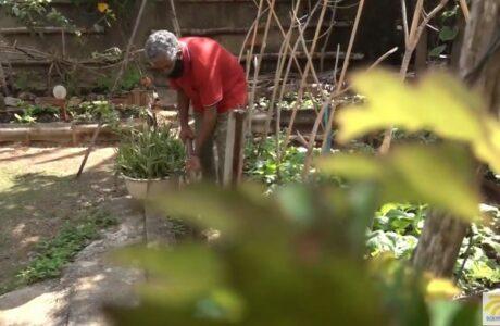 Luis Vinent: un baracoense defensor de la agricultura familiar