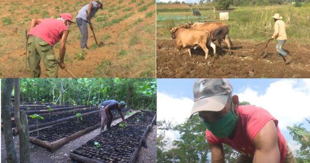 Agropecuarios guantanameros en jornada para celebrar su día