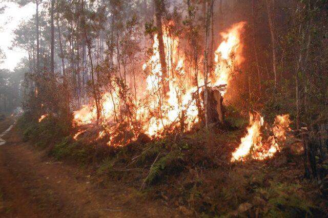 Controlan reavivado foco de incendio forestal en el Parque Humboldt