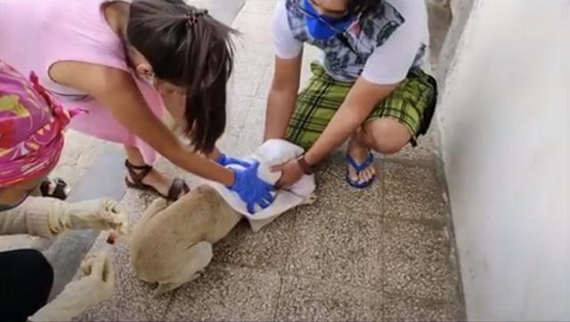 Consolida accionar Grupo de Bienestar Animal en Baracoa
