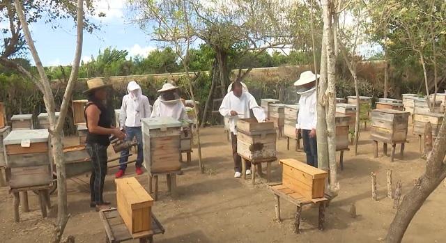 Avanza proyecto con abejas reinas en Centro de Desarrollo de la Montaña