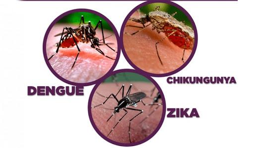 El mosquito aedes aegypti también en la mira de los guantanameros