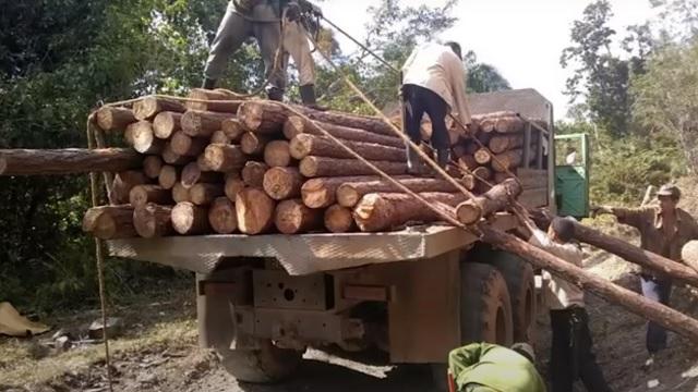 Intenso accionar de agroforestales de Maisí