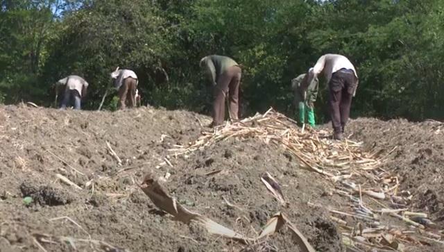 Áreas cañeras y para la producción de alimentos se benefician con reactivación del riego