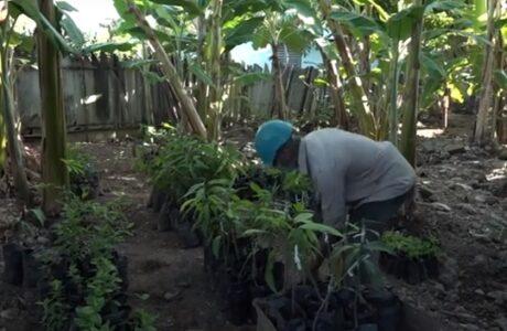 Horticultor baracoense aplica con éxito la ciencia en la agricultura