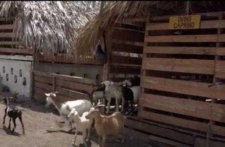Finca La Emilia en Baracoa exhibe resultados en la producción de alimentos