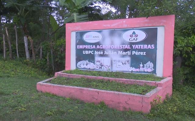 UBPC José Martí: 30 años produciendo desde el lomerío de Yateras