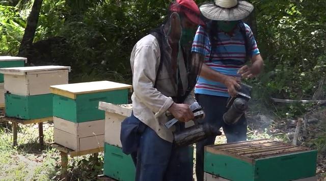 Impulsan en Baracoa, Guantánamo, producción de miel para la exportación