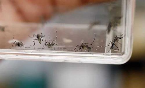 Países de Asean aumentarán acciones de supervisión contra el zika