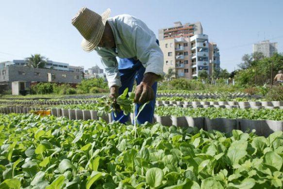 Agricultura urbana, suburbana y familiar: clave para la soberanía alimentaria